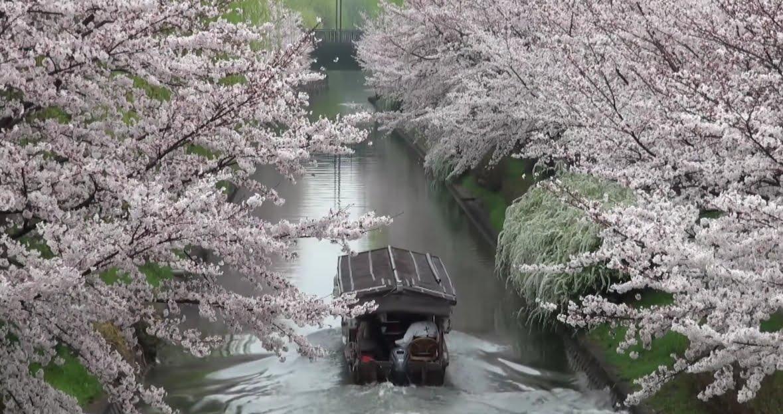 京都・伏見・十石舟・三十石船・月桂冠大倉記念館